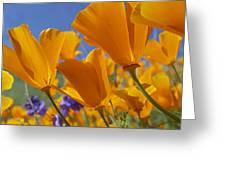 California Poppy Eschscholzia Greeting Card by Tim Fitzharris