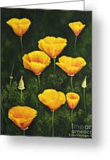 California Poppy Greeting Card by Veikko Suikkanen