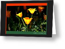 California Poppys 2007 Greeting Card