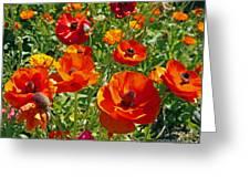 California Poppy's Greeting Card