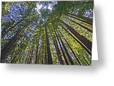 California Redwood Forest Greeting Card by Brendan Reals