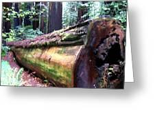 California Redwoods 2 Greeting Card