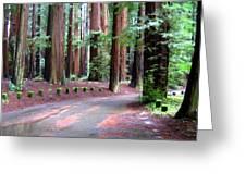 California Redwoods 3 Greeting Card
