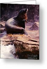 California Sea Lion Raising A Flipper Greeting Card by Anna Lisa Yoder