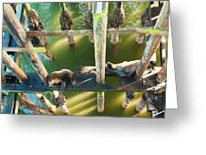 California Sealions Under The Santa Cruz Pier Greeting Card by Artist and Photographer Laura Wrede