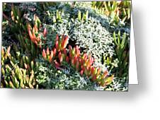 California Seaside Garden Greeting Card