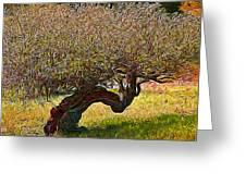 California Summer Oak Greeting Card