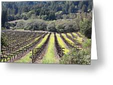 California Vineyards In Late Winter Just Before The Bloom 5d22051 Greeting Card