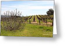 California Vineyards In Late Winter Just Before The Bloom 5d22121 Greeting Card by Wingsdomain Art and Photography