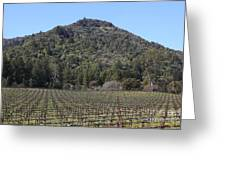 California Vineyards In Late Winter Just Before The Bloom 5d22142 Greeting Card