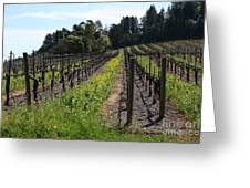 California Vineyards In Late Winter Just Before The Bloom 5d22166 Greeting Card