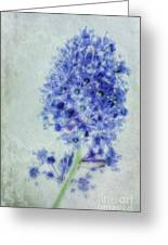 Californian Blue Greeting Card