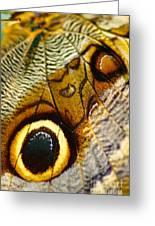 Caligo Atreus Greeting Card