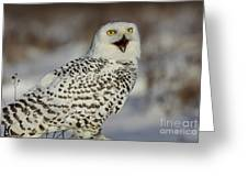 Call Of The North - Snowy Owl Greeting Card by Inspired Nature Photography Fine Art Photography