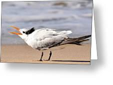 Call Of The Tern Greeting Card by Fraida Gutovich