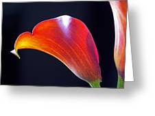 Calla Colors And Curves Greeting Card by Rona Black