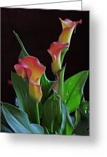 Calla Lilies 2  Greeting Card