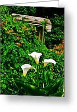 Calla Lilies Vertical Greeting Card