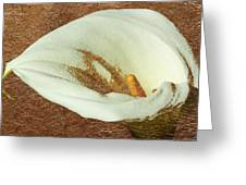Calla Lily Gold Leaf Greeting Card
