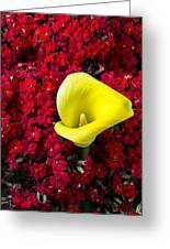 Calla Lily In Red Kalanchoe Greeting Card