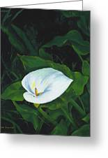 Calla Lily In The Garden Of Diego And Frida Greeting Card