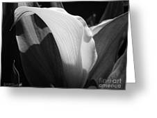 Calla Lily Named Crystal Blush Greeting Card