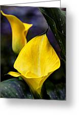 Calla Lily Portrait In Yellow And Green Greeting Card