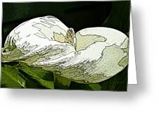 Calla Lily Sketch Greeting Card
