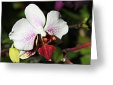 Callaway Gardens Orchid Greeting Card