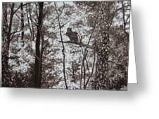 Callaway Great Horned Owl Greeting Card