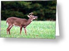 Calling Buck Greeting Card