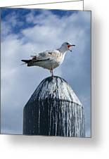 Calling Seagull Greeting Card