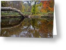 Calm On Big Chico Creek Greeting Card