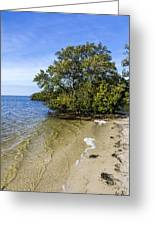 Calm Waters On The Gulf Greeting Card