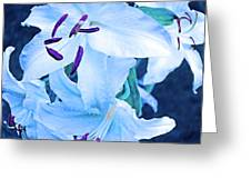 Calming Lily Greeting Card