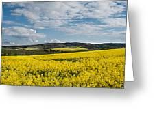 Caloa Field Greeting Card