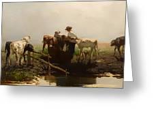Calves At A Trough Greeting Card