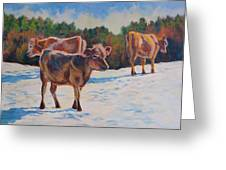 Calves In Snow Greeting Card