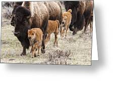 Calving Time Greeting Card