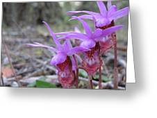 Calypso Orchids Star Gulch Rd Greeting Card