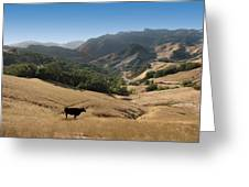 Cambria California Country Road Greeting Card