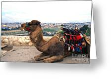 Camel And Jerusalem From Mount Olive Greeting Card by Thomas R Fletcher