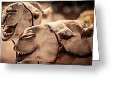 Camel Face Greeting Card