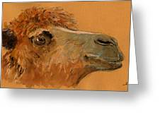 Camel Head Study Greeting Card