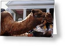 Camel Portrait Greeting Card