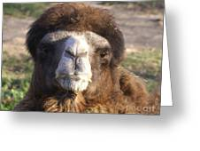 Camel Face Greeting Card