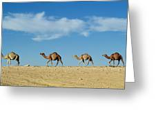 Camel Train Greeting Card
