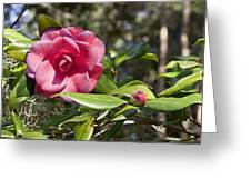 Camelia And Son Greeting Card