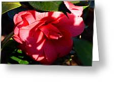 Camelia In The Shadows Greeting Card