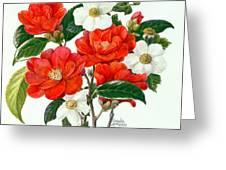 Camellia Adolf Audusson Greeting Card